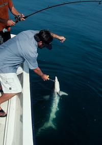 Carolina Sharks!