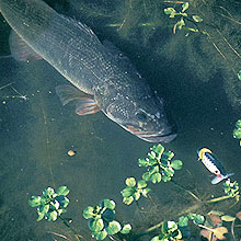 For some high-quality fall bass action, think small -- small lakes, that is. Rhodhiss, Mayo, Mountain Island and Roanoke Rapids have what you're looking for.