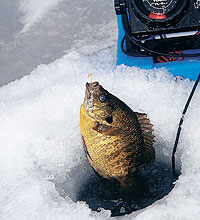 Wait for safe ice to form and then give these top-rated hardwater hotspots a try this winter. (January 2006)