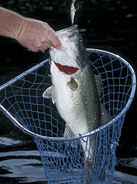 Southern New England's Spring Bass Lakes