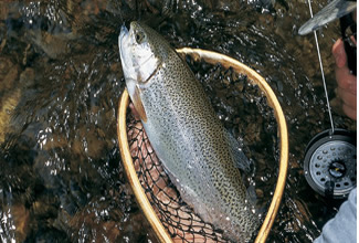 Massachusetts'™ Hottest Spring Trout Streams