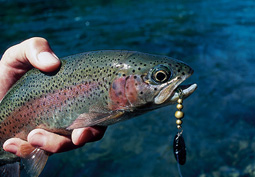 Some excellent trout fishing awaits anglers in New England's fabled North Country, where lunker brookies, browns and rainbows abound. Our expert has the story. (July 2006)