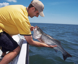 Massachusetts' Cape Cod shoreline continues to provide some of the best summertime striper fishing in the Northeast.  Here's how you can get in on the action this month! (July 2006)