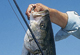 Massachusetts' Hotspots For August Stripers
