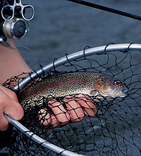 New York's Top February Trout Streams