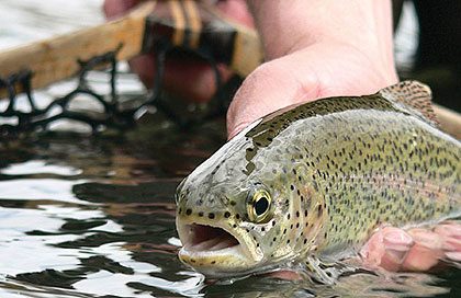 May Trout Rivers