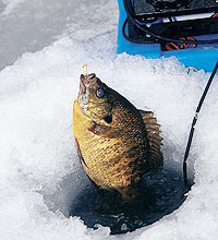Here's a look at the action that Buckeye State ice-anglers are likely to encounter this season. (January 2006)