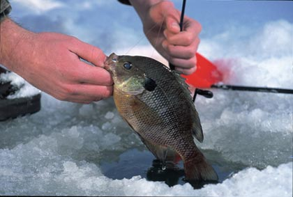 Here's a sampling of biologist-recommended lakes where hot bluegill action may be had this month from shore, boat or on the ice. (February 2007)