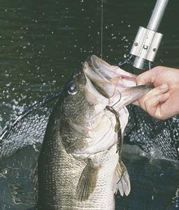 Things are looking up for Buckeye State bass anglers in 2007. Here's a look at what anglers can expect as they make plans for another exciting year on the water. (March 2007)