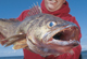 Our Finest July Walleye Lakes