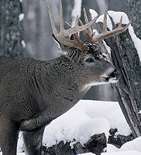 Try these proven December deer-hunting hotspots for exciting gun-season action near you this month. (December 2005)