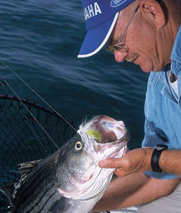 Oklahoma anglers are lucky to have such great fishing for striped bass so close at hand. Here's how 2008's fishing should shape up at our top waters. (April 2008)