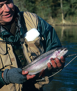 Our Top 10 Winter Trout Streams