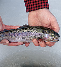 Here's a look at where to find some great hardwater trout fishing in western Pennsylvania this month. (February 2006)