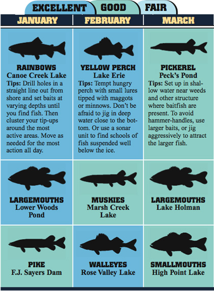 Here's a sampling of 36 great fishing trips to consider as you make your 2008 angling vacation plans.  (February 2008).