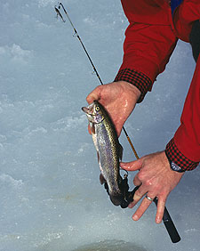 Here's a sampling of 36 great fishing trips to consider as you make your 2010 Keystone State fishing vacation plans. (February 2010)