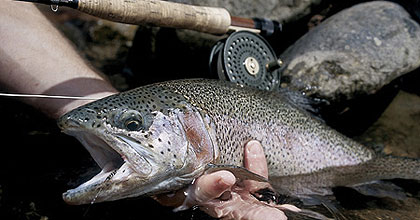 Pennsylvania's 2006 Trout Forecast