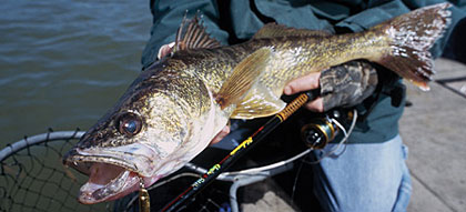 Pennsylvania 39 s 2006 walleye forecast for Best fishing in pa