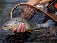 South carolina 39 s five best trout waters for Best trout fishing in pa