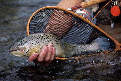 Our finest trout fishing for Fish stocking ca