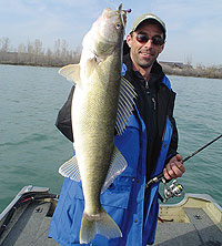 Ace Of Spades For April Walleyes