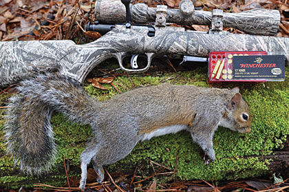 to shooting air guns and rimfires is chock full of pleasant surprises