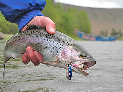 catch trout now with ultralight spinning tackle, Fly Fishing Bait