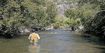 The Logan includes 50 miles of fishable water, with trout populations that rival the most famous fisheries in the state. If you like big fish, big water and no company, there's nothing like it in Utah. (March 2006)
