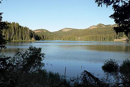 2009 Colorado Trout Forecast