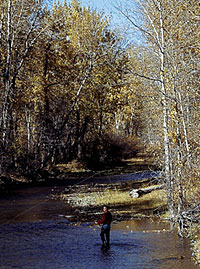 Sure, you can fight the crowds and spend a ton of money to fish in Yellowstone National Park. But why would you do that, when the fishing is even better in these downstream locales? (April 2006)