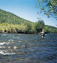 White River Trout