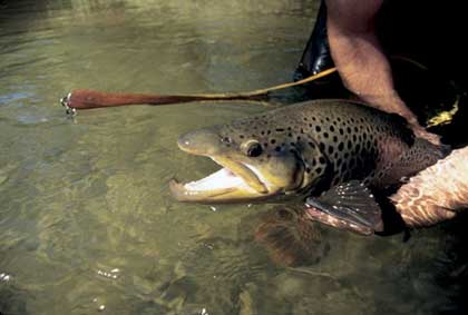 Break out your map and circle these waters for excellent brown trout fishing -- with some elbow room. (September 2007)