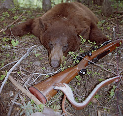 We've narrowed down the best fall bear-hunting locations in Idaho, Montana, Wyoming and Colorado. (October 2009)