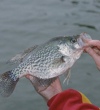 If you're searching for top-shelf crappie fishing, you have plenty of choices in our state. (February 2006)