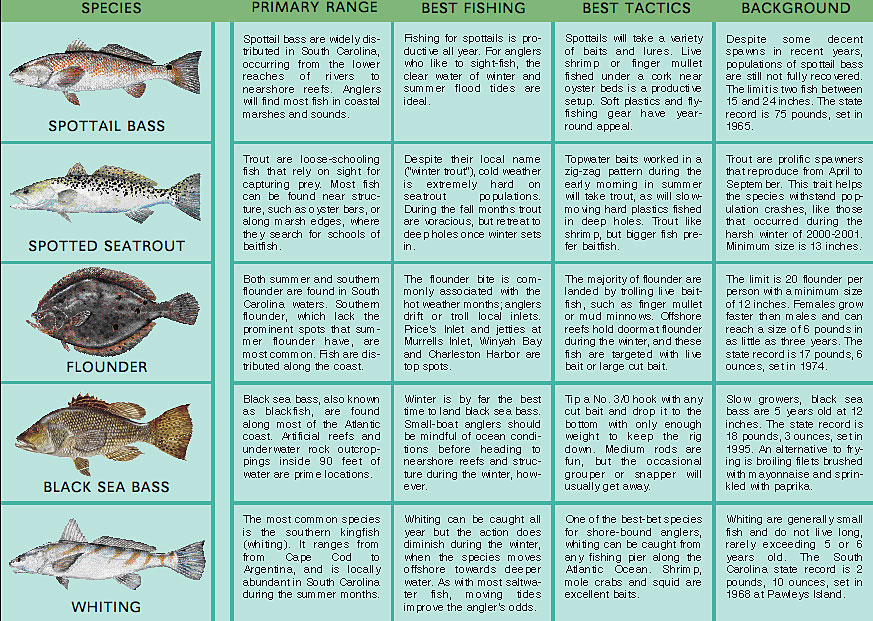 Saltwater fish chart sc saltwater fish chart florida for North carolina saltwater fishing license