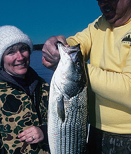 When stripers decide to feed in the winter, the action can be great. The stripers on these four lakes could make this the hottest January you've seen in a long time. (January 2007)