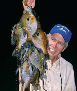 With the May panfish spawn revving up, here's a guide to some of the best bream fishing waters across the state. (May 2008)