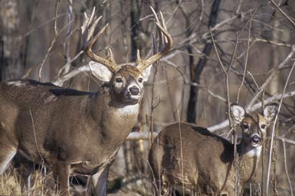 After a record-setting harvest last year, biologists predict an even better season this year for Tennessee deer hunters. (October 2007)