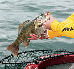 Here's a look at some of the best smallmouth bass fishing throughout the year in Tennessee. (December 2009)
