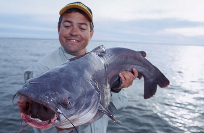 Texas 39 best catfishin 39 for Fat fish blue toledo