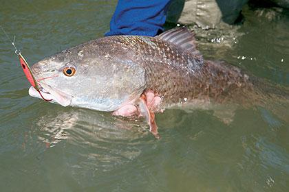 Texas' 2009 Saltwater Outlook