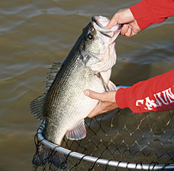 Check out the bass fishing at these prime East Texas locations this month -- and use these patterns to score! (October 2008)
