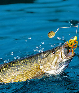 2 Great Fisheries For Virginia's Black Bass