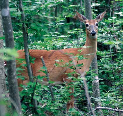 Special deer seasons have expanded the time hunters can spend afield by four months. Here's how to get the most out of  these special seasons.