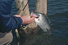 36 Great Fishing Trips In Virginia