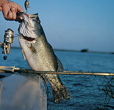 Spring means largemouth bass with their noses pointed to the shallows -- and, with any luck, your baits. But where to launch your boat? Here are some of our top picks. (March 2006)