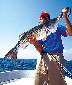 As the temperatures warm in May, so does the striped bass action in the Chesapeake Bay. Our pro has the tips to help you hook the fish of a lifetime. (May 2009)