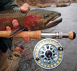 Wisconsin's Lake Michigan tributaries are swarming with hard-fighting steelhead right now. Here's how and where to get in on the action for these silver rockets! (February 2010)