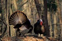 Our state's turkey hunters had a great season last year, and the forecast is even better for 2005. Here's how your hunting zone stacks up.