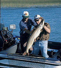 Southern Wisconsin's Best Bets For Muskies